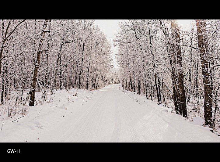 The beauty of a winter road.